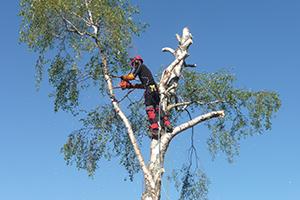 elagage arbre tarbes